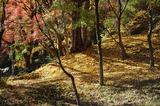 用作公園の紅葉 (10)