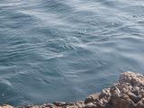 潮は磯際を流れて