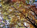 用作公園の紅葉 (20)