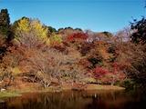 用作公園の紅葉 (15)
