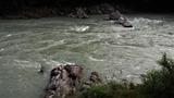 増水ドチャ濁りの小丸川 (2)