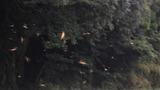 トンボの大量羽化 (2)