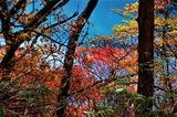 えびの高原秋の池周コース・六観音御池 (6)