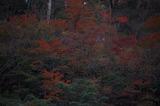 霧島の紅葉 (6)