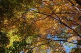 用作公園の紅葉 (9)