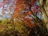 用作公園の紅葉 (17)