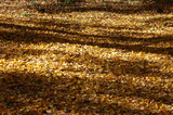 用作公園の紅葉 (13)