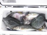 クーラー満タンも魚種は賑やかです
