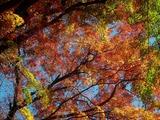 用作公園の紅葉 (19)