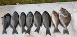 24日の釣友達の釣果の一部