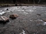 一ツ瀬川の鮎釣り (6)