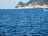 イルカの群れ (3)