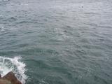 潮が引いたので先端へ (2)