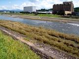 ちょっと水が多い時の三隈川 ・かんぽ前