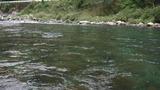 一ツ瀬川の鮎釣り (2)
