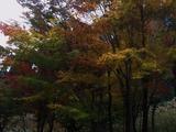 霧島の秋紅葉 (3)