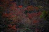 霧島の紅葉 (5)