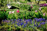 春爛漫の花畑