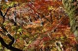 用作公園の紅葉 (2)