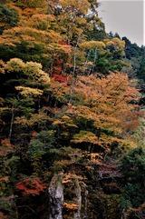五ヶ瀬の紅葉 (2)