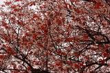 大坪の1本桜 (5)