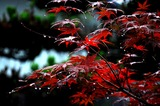 雨の庭 (2)
