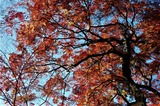 用作公園の紅葉 (3)
