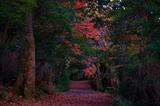 えびの高原秋の池周コース・六観音御池 (5)