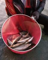 5日の釣友達の釣果