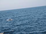 イルカの群れ (1)