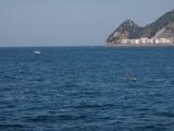 イルカの群れ (2)