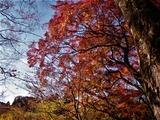 用作公園の紅葉 (18)