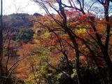 用作公園の紅葉 (16)