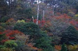 霧島の紅葉 (4)