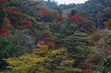 霧島の紅葉 (3)
