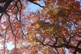 用作公園の紅葉 (6)