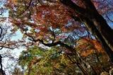 用作公園の紅葉 (5)