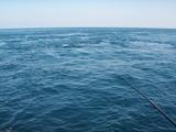 ポイントは本流の引かれ潮の合流点 (1)