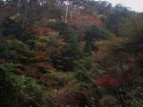 霧島の秋紅葉 (1)
