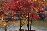 用作公園の紅葉 (12)