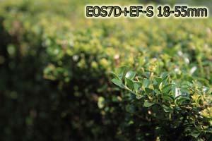 EOS7D_TEST_005