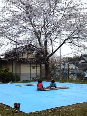 桜まつり4