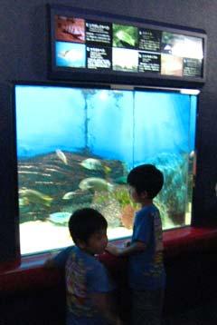 須磨海浜水族園4