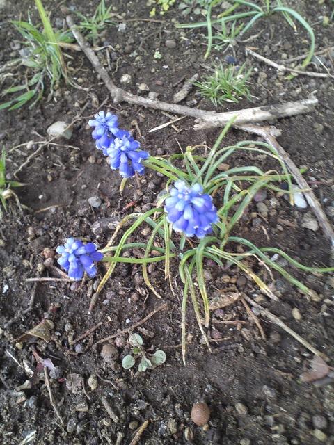 春の野草4