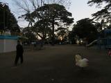 朝6時30分、静かに集まり散じて、百人近くがラジオ体操@大宮公園
