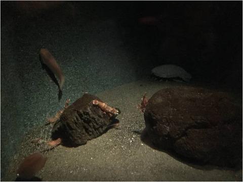 葛西臨海水族園 10