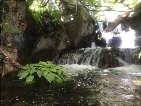 葛西臨海水族園 24