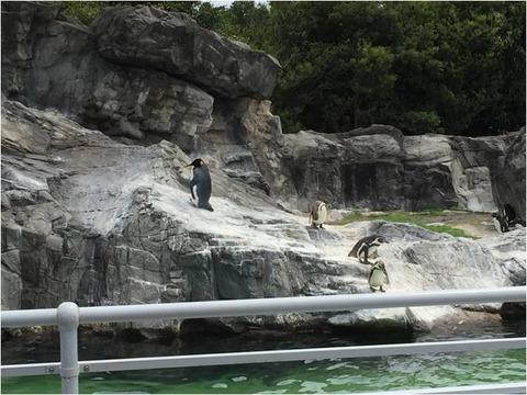 葛西臨海水族園 16
