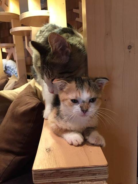 猫カフェ モカ@池袋 11