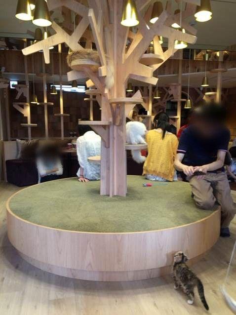 猫カフェ モカ@池袋 14